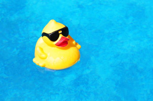 ברווז פלסטיק בבריכה